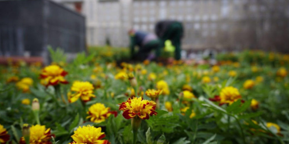 The opera theater was planted with bright flowers