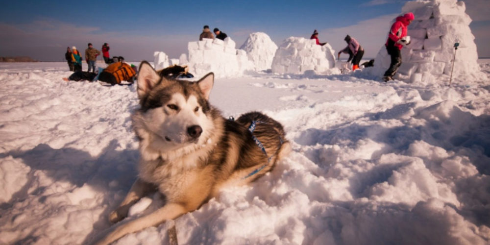 How about building a snow house?