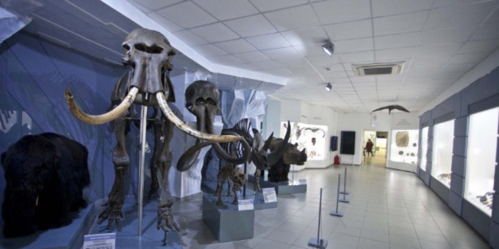Spend the night with a mammoth! Join 'Night of the Museums'