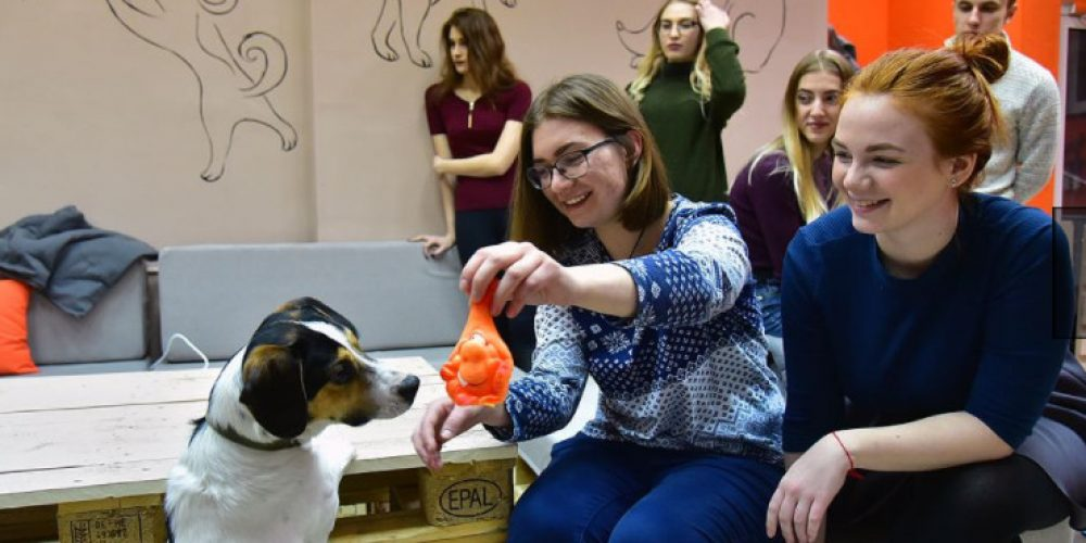 In Novosibirsk, the first 'dog cafe' in Russia opened